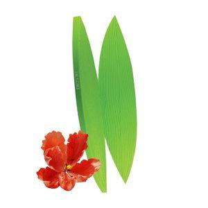 Parrot Tulip Leaf Veiner by James Rosselle